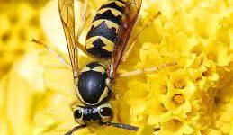 wespennest verwijderen Arnhem